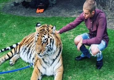 bieber_tiger